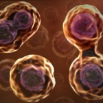 Study Finds Senescent Cells Accelerate the Aging Process