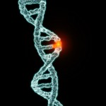 Inherited gene mutation appears to shorten telomeres and increase cancer risk