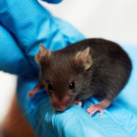 Scientists Can Now Radically Expand the Lifespan of Mice—and Humans May Be Next